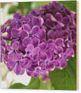 Pretty Lilac Bush Wood Print