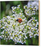 Pretty Little Ladybug Wood Print by Mariola Bitner