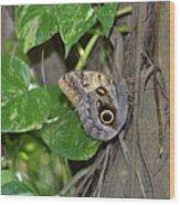 Pretty Morpho Butterfly Resting In A Butterfly Garden  Wood Print
