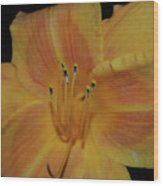 Pretty Orange Daylily Flowering With Pollen On It's Stamen Wood Print