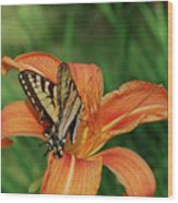 Pretty Orange Lily With A Butterfly On It's Petals Wood Print
