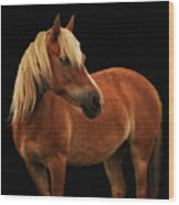 Pretty Palomino Pony Wood Print