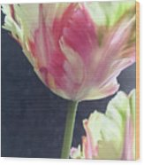 Pretty Parrot Tulip 2 Wood Print