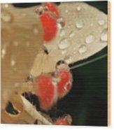Pretty Peach Hibiscus  Wood Print