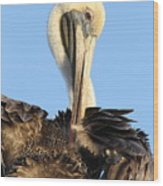 Pretty Pelican Wood Print