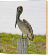 Pretty Pelican Wood Print