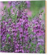Pretty Pink And Purple Flowers Wood Print