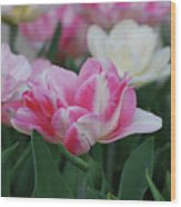 Pretty Pink And White Striped Ruffled Parrot Tulips Wood Print