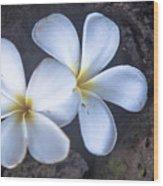 Pretty Plumeria Wood Print