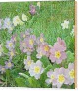 Pretty Primulas 1008 Wood Print