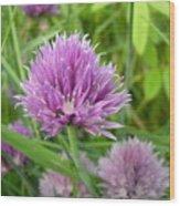 Pretty Purple Chive Flower Wood Print
