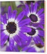 Pretty Purple Daisies Wood Print