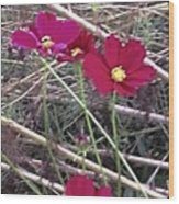 Pretty Red And Yellow Flowers In The Twigs Wood Print