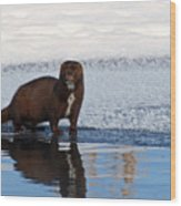 Pretty Reflecting Mink Wood Print