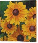 Pretty Rudbeckia Flowers In Bloom Wood Print