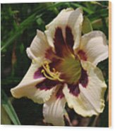 Pretty Single Blooming Daylily In A Garden Wood Print