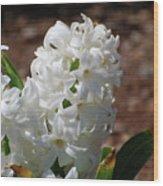 Pretty White Hyacinth Flower Blossom Flowering Wood Print