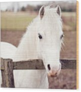 Pretty White Pony Looking Over Fence Wood Print by Sharon Vos-Arnold