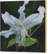 Pretty White Stargazer Lily Flower Blossom Wood Print