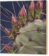 Prickly Buds Wood Print