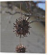 Prickly Liquidamber Pod Wood Print
