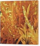 Prickly Orange Shrub Wood Print