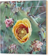 Prickly Pear Bloom Wood Print