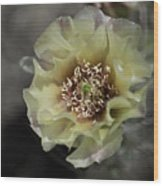 Prickly Pear Blossom 3 Wood Print by Roger Snyder