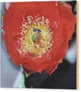 Prickly Pear Blossom With Bee Wood Print