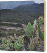 Prickly Pear Cacti Rancho Sierra Vista Satwiwa Mountains Wood Print