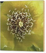Prickly Pear Cactus Flower Wood Print