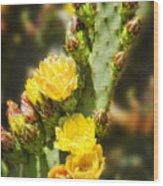 Prickly Pear Cactus In Bloom Wood Print