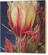 Prickly Pear Flower Wet Wood Print