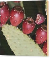 Prickly Pear-jerome Arizona Wood Print