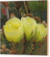 Prickly Pear Trio Wood Print