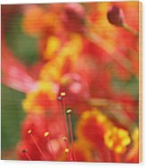 Pride Of Barbados Wood Print
