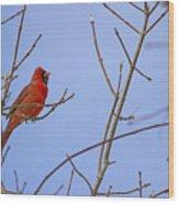 Primary Colours - Northern Cardinal - Cardinalis Cardinalis Wood Print