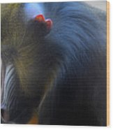 Primate1 Wood Print