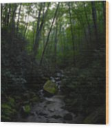 Primordial Forest Wood Print