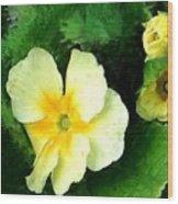 Primrose 2 Wood Print