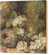Primroses And Bird's Nests On A Mossy Bank Wood Print