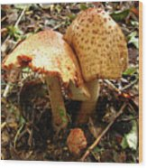 Prince Agaricus Mushroom Wood Print