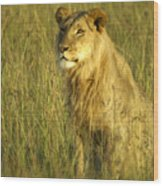 Princely Lion Wood Print