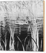 Private Duck Swimming Hole 1 In Black And White Wood Print
