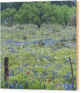 Private Property -wildflowers Of Texas. Wood Print