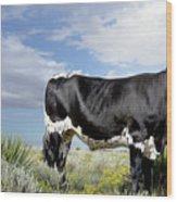 Prized Heiffer, Ojo De La Vaca, New Mexico, August 30, 2016 Wood Print