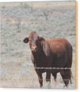 Proby's Cow Wood Print
