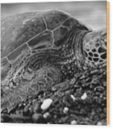 Profile Hawaiian Sea Turtle Bw Wood Print
