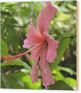 Profile Hibiscus Wood Print