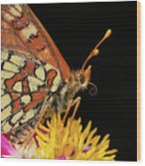 Profile Of A Butterfly Wood Print